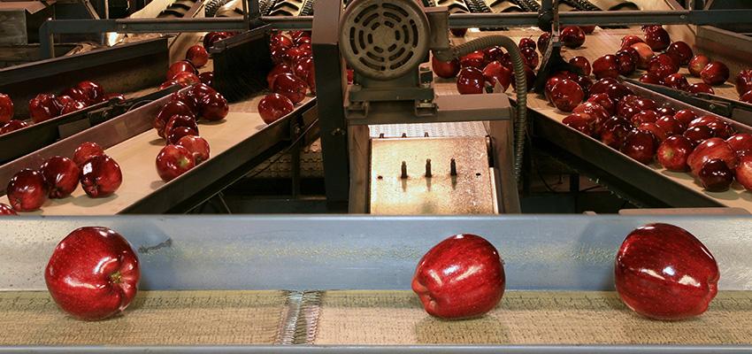 La aplicación de la visión artificial en la industria alimentaria de productos frescos